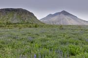 Iceland-164
